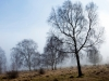Fog at Rudge Hill, Edge Common - part of the Cotswold Commons & Beechwoods National Nature Reserve, Gloucestershire
