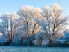 The sun setting on hoar frost on pollarded willow trees in the Coln Valley near the Cotswold village of Winson, Gloucestershire