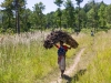 A young woman (with a baby on her back) carrying a heavy load of firewood down from Dedza Mountain, Dedza, Malawi, Africa