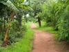 A tree lined path on the edge of the village of Kendekeza, Malawi, Africa