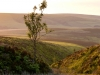 Evening light on Stoke Pero Common, Exmoor, Somerset